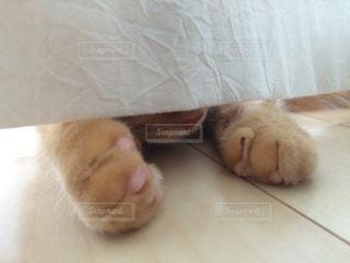 猫の写真・画像素材[284061]