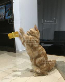 猫の写真・画像素材[284064]