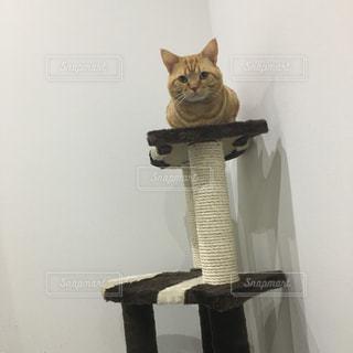 猫 - No.508868