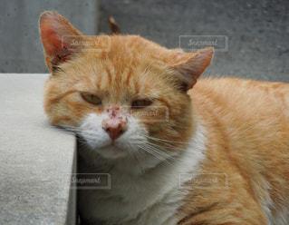 猫 - No.295483