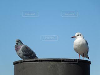 鳥 - No.310108