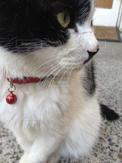 猫 - No.310113