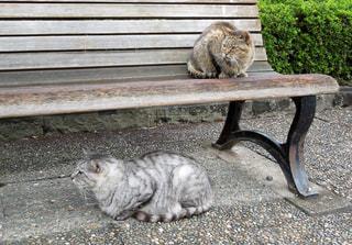 猫の写真・画像素材[317032]