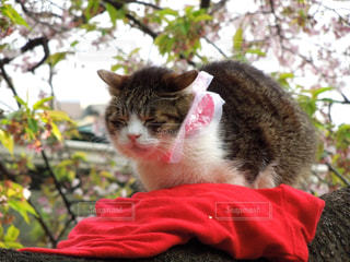 猫 - No.390902