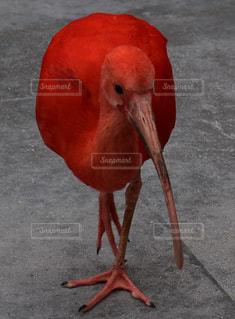 鳥の写真・画像素材[565205]