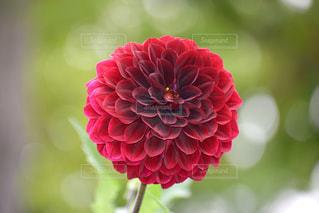 近くの花のアップの写真・画像素材[724121]