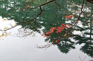 湖面に映る風景の写真・画像素材[844031]
