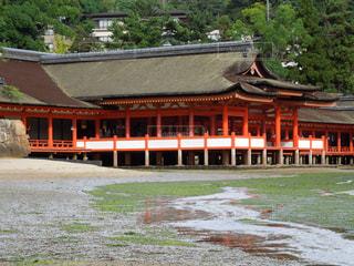 厳島神社の写真・画像素材[1041568]