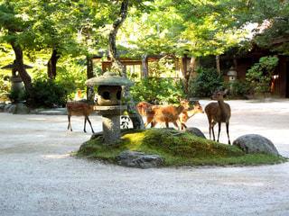 鹿の群れの写真・画像素材[1076197]