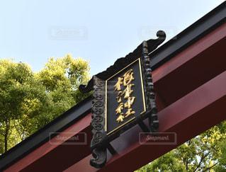 ツヅジがいっぱいの根津神社の写真・画像素材[1143546]