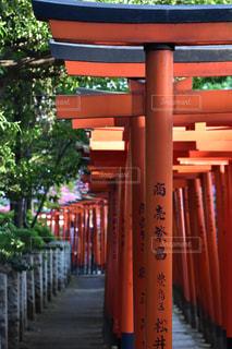 根津神社の鳥居の写真・画像素材[1143620]