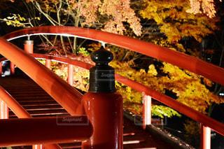 河鹿橋の紅葉の写真・画像素材[1604665]