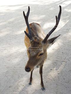 鹿との戯れの写真・画像素材[1779218]