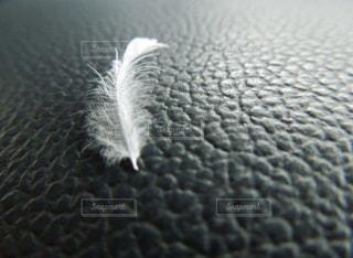 羽毛がハラリとの写真・画像素材[1989433]