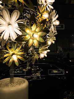 電球で浮かび上がる花びらの写真・画像素材[288520]