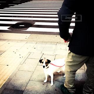 横断歩道の犬 - No.318838