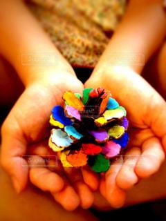 虹色の松ぼっくりの写真・画像素材[323577]
