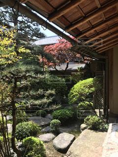 庭の写真・画像素材[478674]