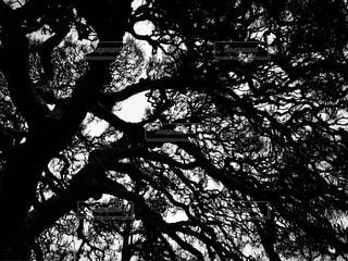 複雑に伸びる樹木のシルエット - No.889909