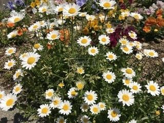 花瓶が覆われた芝生の上に座っている花でいっぱいの写真・画像素材[1139265]