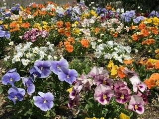 近くの花のアップの写真・画像素材[1139267]