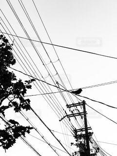 電線と樹木とツバメ - No.1140352