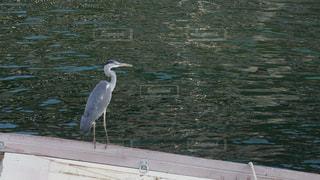 神戸の海辺に佇んでいる鳥の写真・画像素材[1480193]