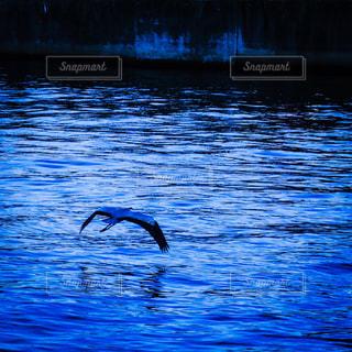 神戸の海辺を飛ぶ鳥の写真・画像素材[1480194]