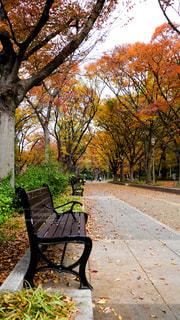 大阪の都会にある靱公園の秋、午後の昼下がりの写真・画像素材[1668363]
