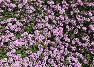 大都会の街角の花壇で見かけた小さい可愛らしい花の写真・画像素材[2047970]