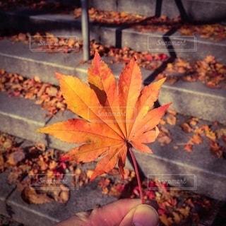 秋、真っ盛り!の写真・画像素材[2718880]