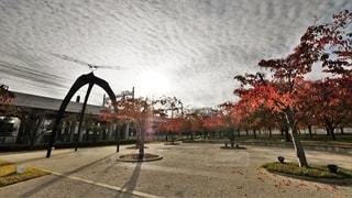 大阪門真市西三荘駅近くにあるパナソニックミュージアム内のさくら広場の秋の景色の写真・画像素材[2721810]