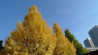 大都会東京の街並みにも美しい秋の色の写真・画像素材[2749012]