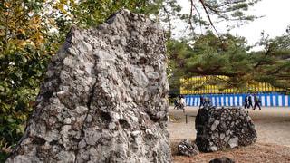 橿原神宮にある日本国歌にも歌われているさざれ石の写真・画像素材[2845092]