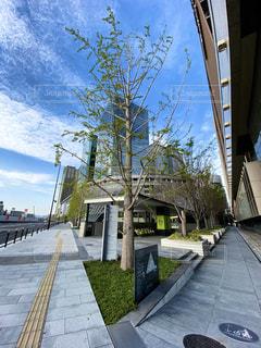大都会大阪のグランフロント大阪うめきた広場にある小さな樹木の写真・画像素材[3122068]