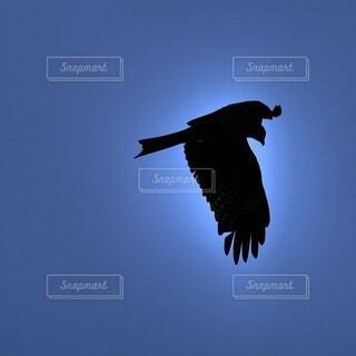 空を飛んでいる鳥のシルエットの写真・画像素材[4221979]