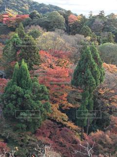 自然の写真・画像素材[284110]