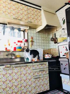 キッチンの猫の写真・画像素材[1019328]