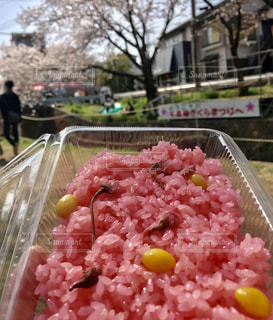 桜見ながら花ごはんの写真・画像素材[1147892]