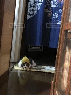 木製のドアの上に座っている猫の写真・画像素材[1411180]