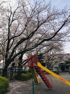 桜の終わりと滑り台の写真・画像素材[3082635]