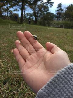 自然の写真・画像素材[284446]