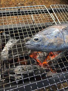 No.427019 魚