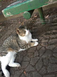 猫 - No.284319
