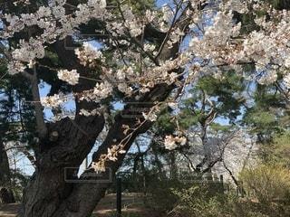 木のクローズアップの写真・画像素材[2373686]