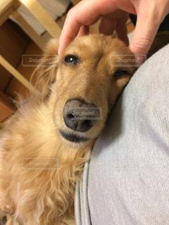 犬の写真・画像素材[293785]