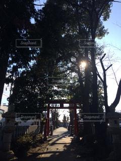 神社の写真・画像素材[304730]