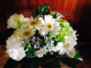 花の写真・画像素材[284409]