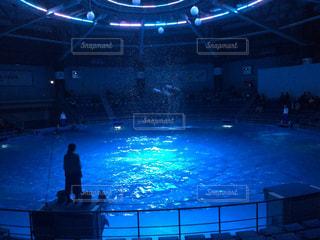 イルカの写真・画像素材[326645]