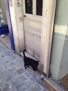 猫の写真・画像素材[287219]
